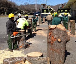 Chainsaw safety workshop