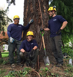 Bartlett Tree Experts Tree Service And Shrub Care In