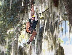 Savannah arborist training in the trees