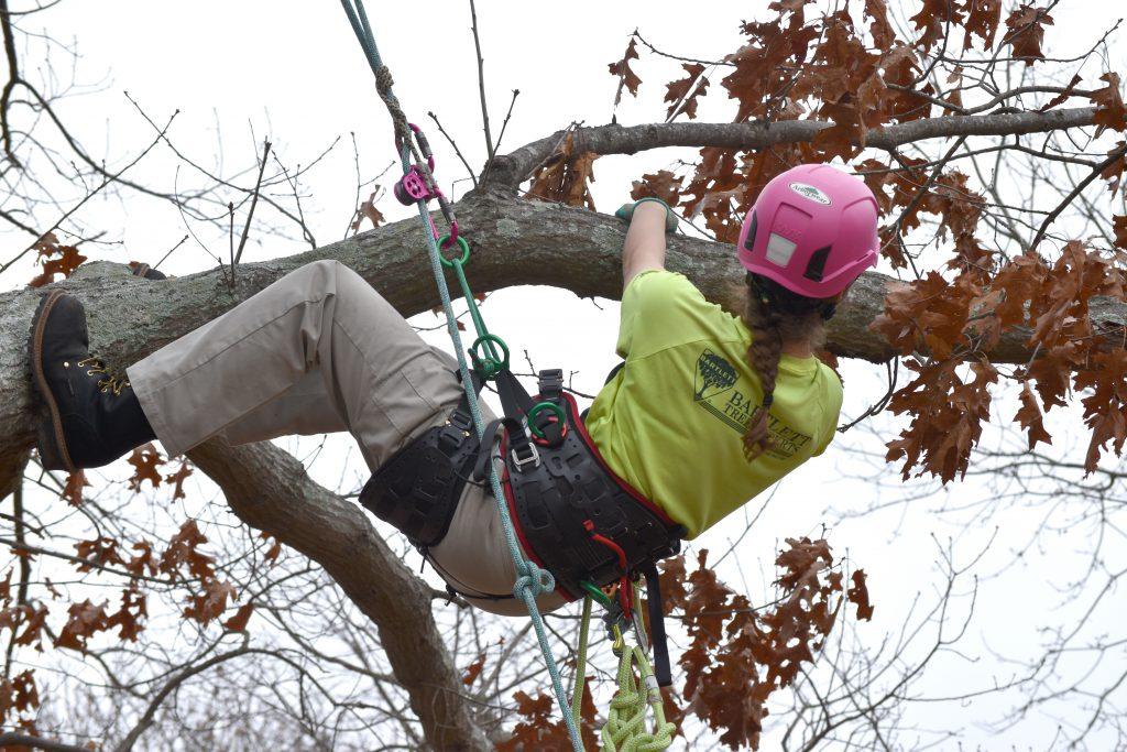 10 field day climbing 2 1024x683 - Bartlett Women in Arboriculture
