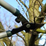 2789290 l 150x150 - Winter Tree Pruning: When and Why