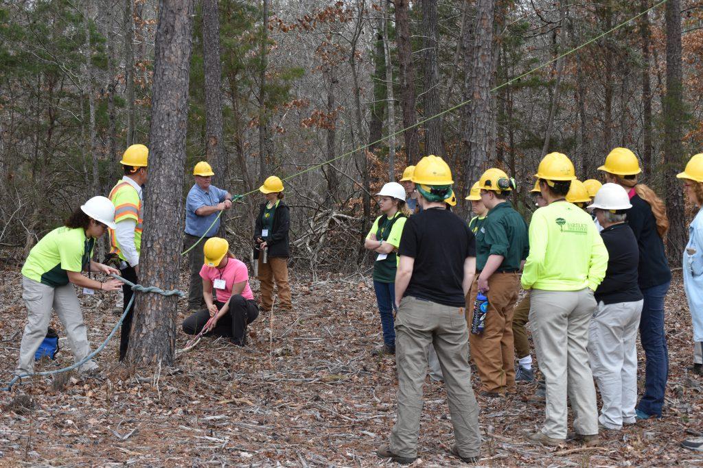 6 field day felling 1024x683 - Bartlett Women in Arboriculture