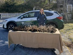 800 cornus florida seedlings at Quogue Wildlife Refuge 300x226 - Celebrating Arbor Day and Earth Day 2021