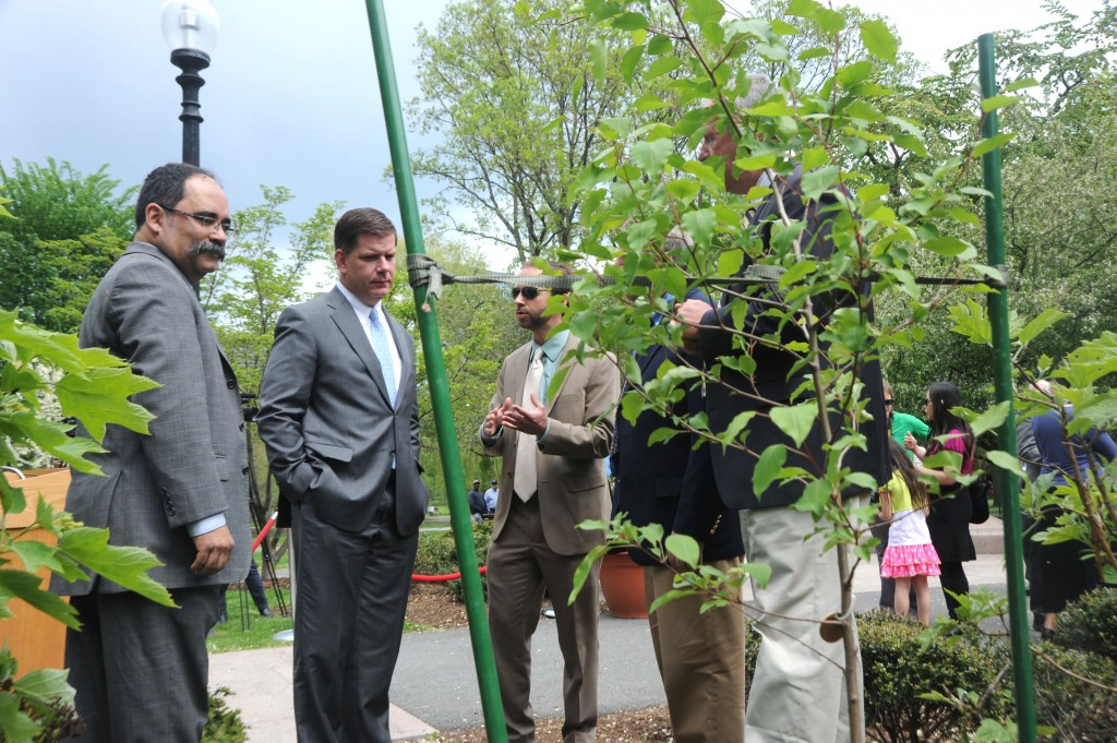 9 11 Survivor Tree3 1024x681 - Planting of Survivor Tree Sapling at Boston Public Gardens