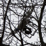 Aerial Drone Stuck in Tree 150x150 - Stuck Up a Tree: Tips for Getting Drones Down