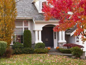 Autumn Tree Care 300x227 - Autumn Tree Care To-Do List