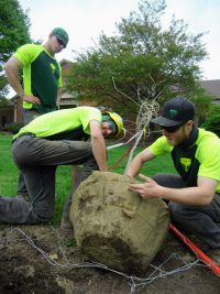 Holden Arboretum 200x267 - Celebrating Arbor Day and Earth Day 2021
