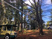 MA Arborist Association 200x150 - Celebrating Arbor Day and Earth Day 2021