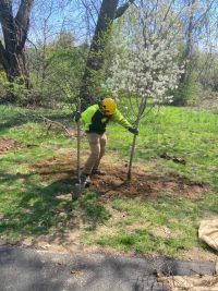 Simsbury 200x267 - Celebrating Arbor Day and Earth Day 2021