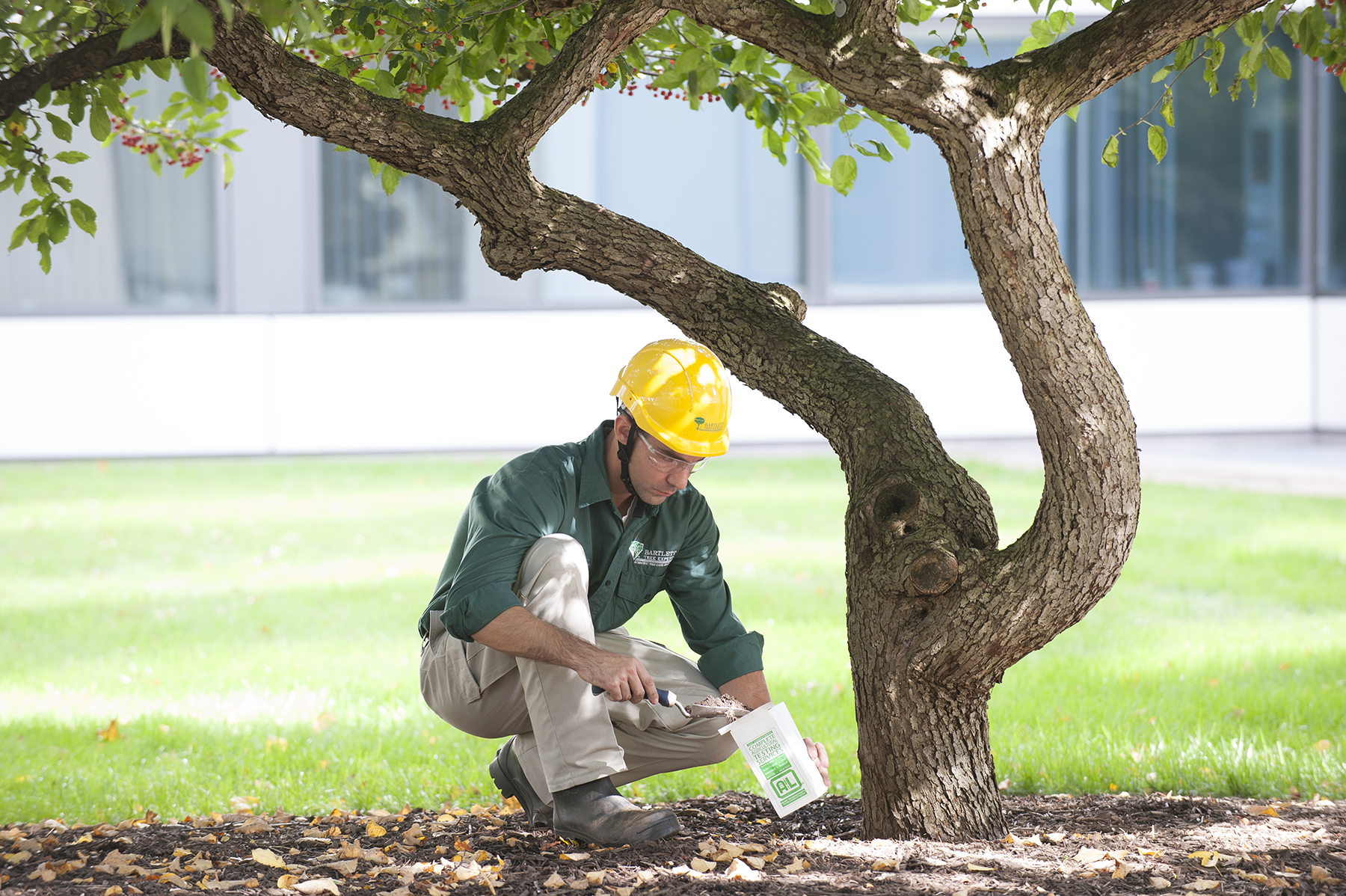 A soil sample collected from beneath the tree will be analyzed to ensure soil treatments adequately address problems.