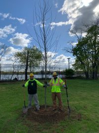Stamford 200x267 - Celebrating Arbor Day and Earth Day 2021