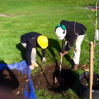 arbor day beverly farms 2016 c 200x200 - Arbor Day and Earth Day 2016