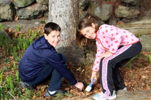 arbor day waltham brookline 2016 b 300x200 - Arbor Day and Earth Day 2016