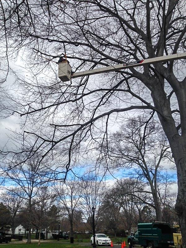 ballard park - Arbor Day and Earth Day 2015
