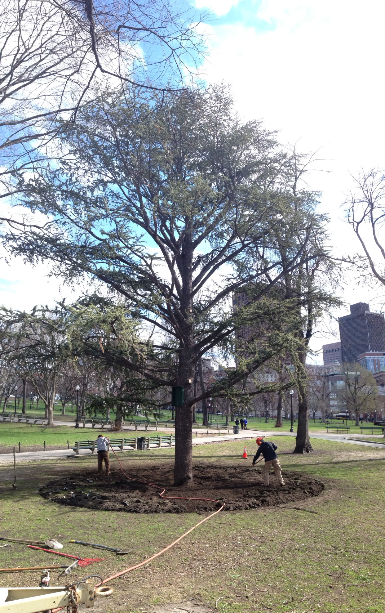 boston common - Arbor Day and Earth Day 2015