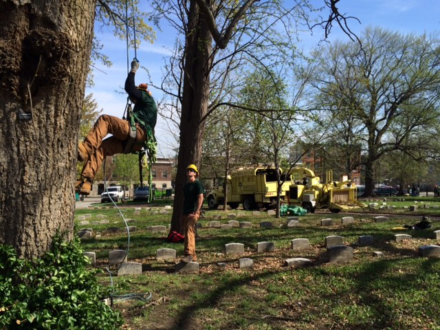 fair hill - Arbor Day and Earth Day 2015