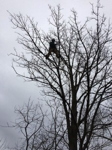 foreman jon loughlin rescues a drone 225x300 - Stuck Up a Tree: Tips for Getting Drones Down