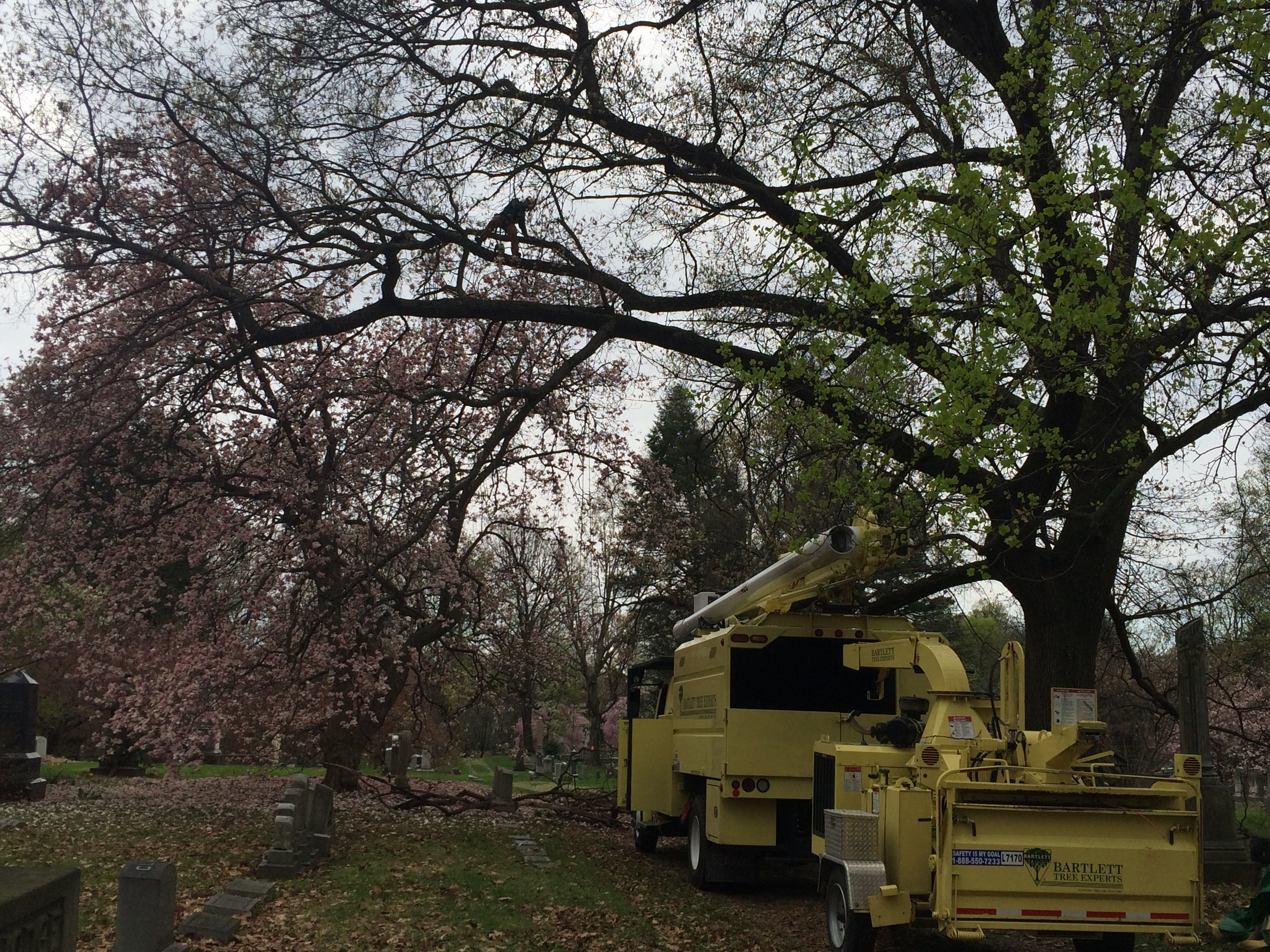 harrisburg cemetery - Arbor Day and Earth Day 2015