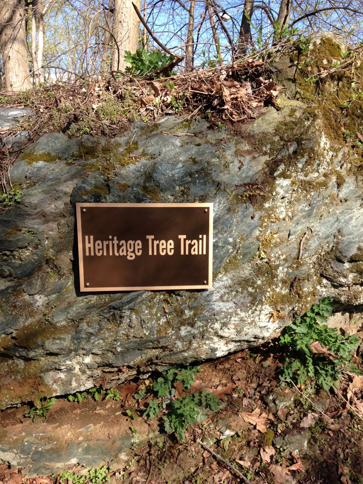 heritage tree trail - Arbor Day and Earth Day 2015