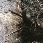 mudslide santa barbara 150x150 - Tree Roots: Buried Root Systems Recovery Plan