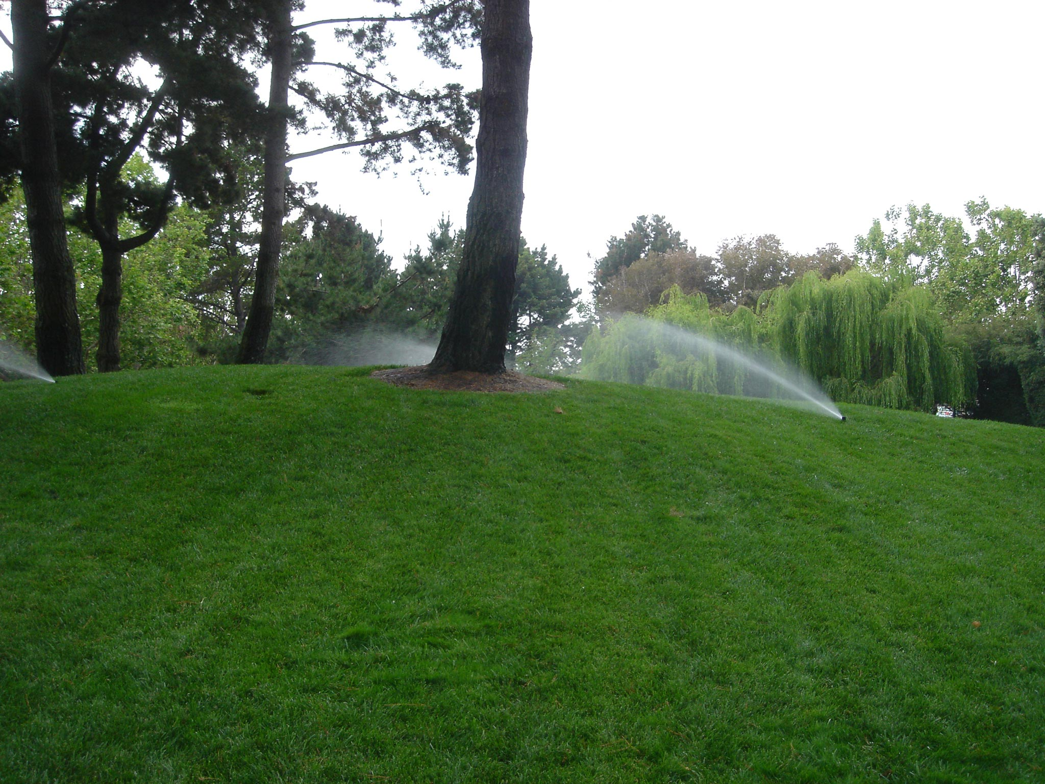 over irrigation - Five Common Tree Care Mistakes on Commercial Properties