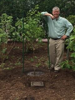 photo 2 2 - Planting of Survivor Tree Sapling at Boston Public Gardens