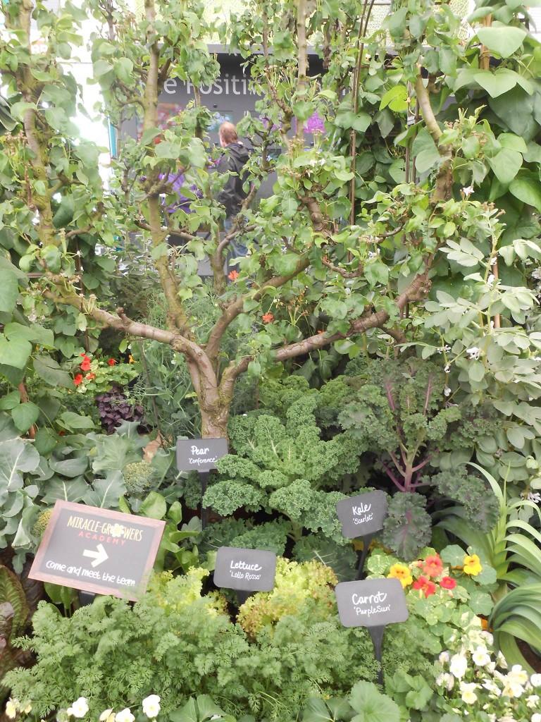rhs chelsea 2015 e 768x1024 - RHS Chelsea Flower Show 2015