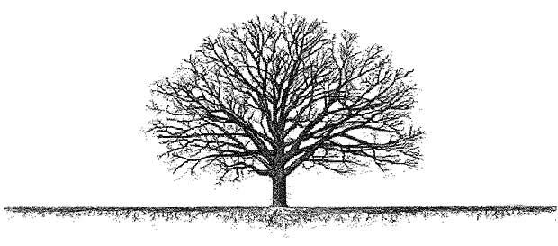 Hidden Dangers 171 Tree Advice 171 Tree Topics
