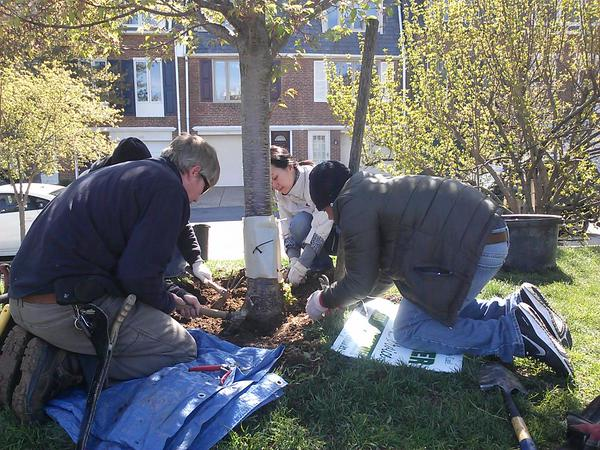 schuylkill park - Arbor Day and Earth Day 2015