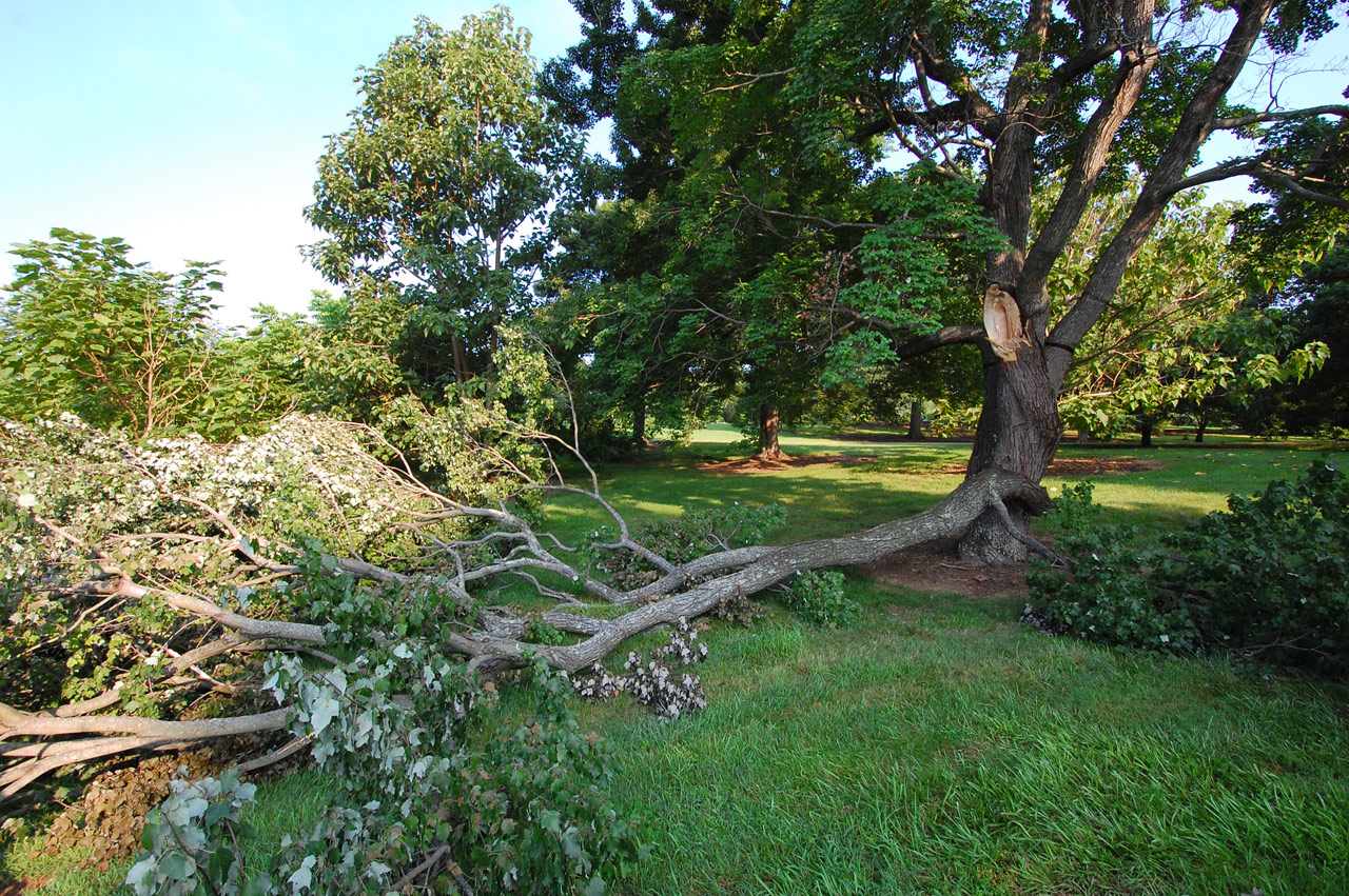 Structural defects predispose a tree to failure, even under normal weather conditions.