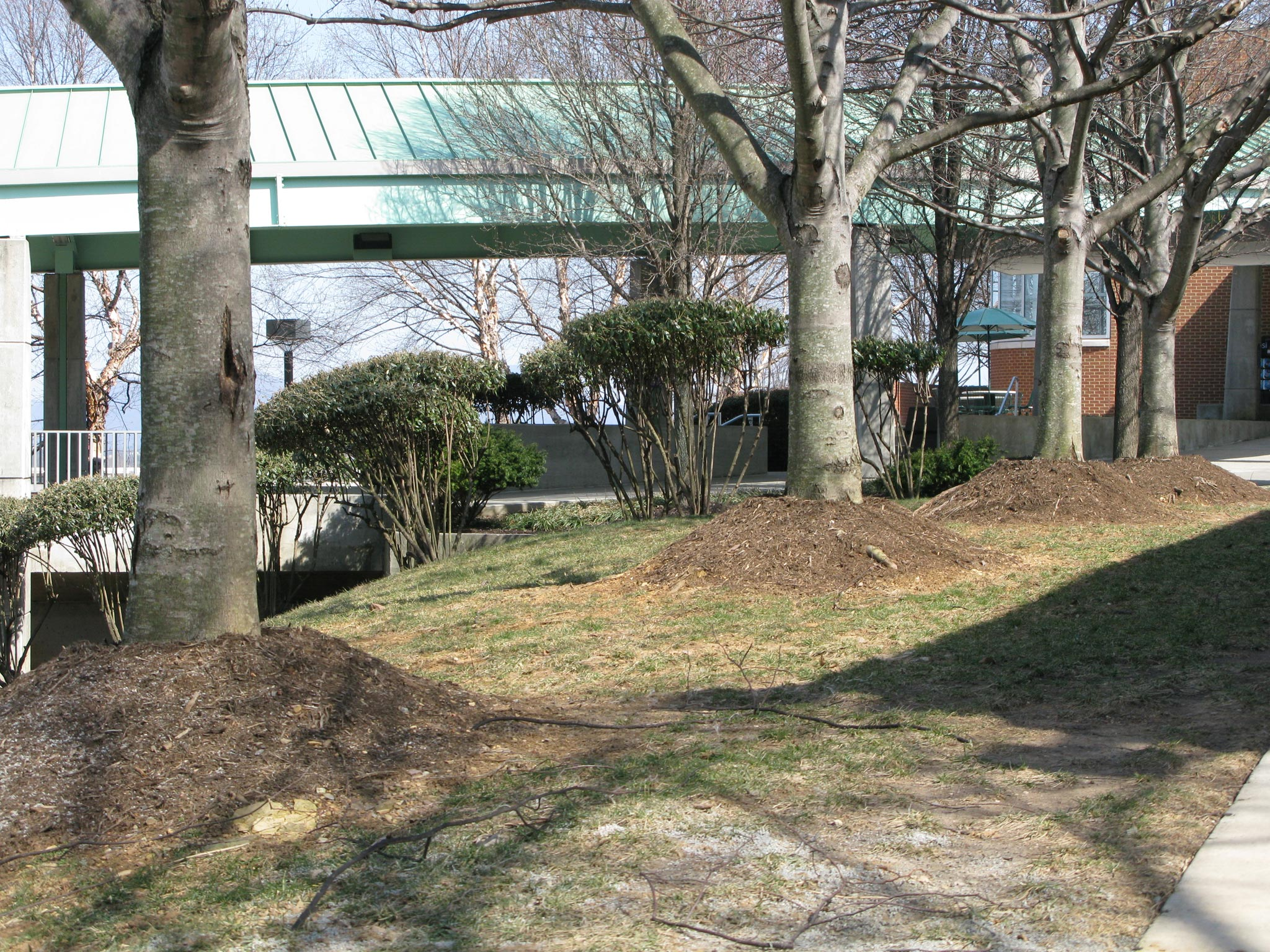 too much mulch - Five Common Tree Care Mistakes on Commercial Properties