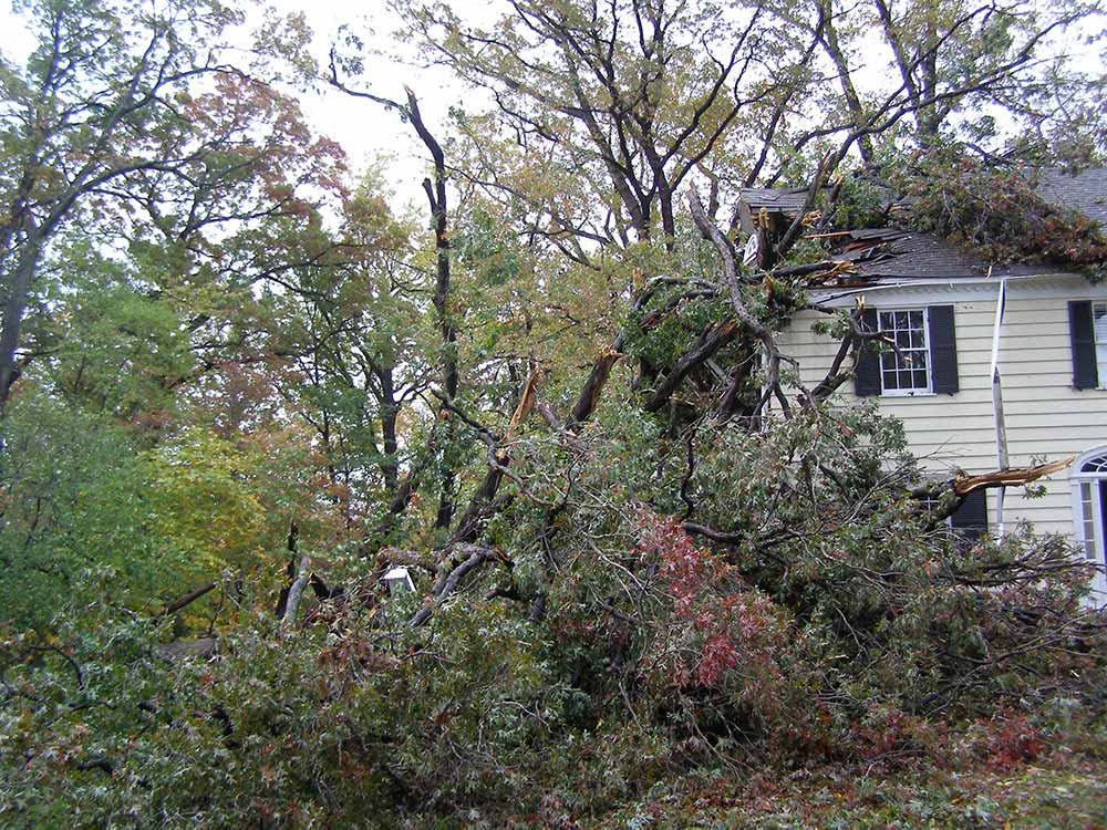 tree damaged home