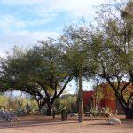 tree growth regulators 150x150 - Tree Growth Regulators