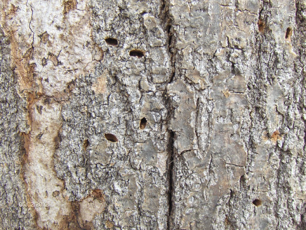 tx borer damage 1024x770 - Hiding in Plain Sight: Common Signs of Insect Invaders
