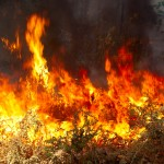 wildfire 150x150 - Reducing Vulnerability to Wildfires