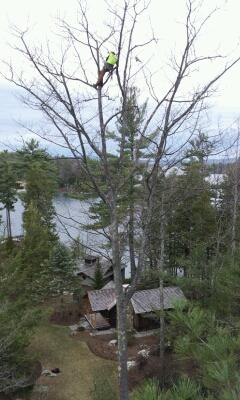 wolfeboro5 - Pruning at 60 Feet Up