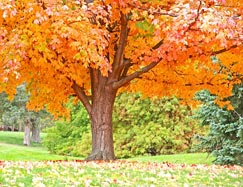 Start Thinking About Autumn Pruning