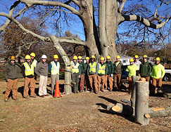 Now hiring experienced tree care professionals