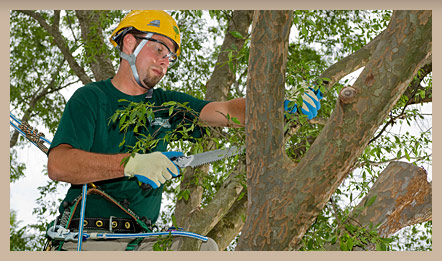 ... Tree Service and Shrub Care in Williamsburg VA Bartlett Tree Experts