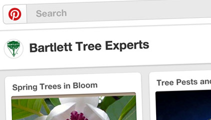Bartlett Tree Experts is now on Pinterest