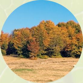 Bartlett Tree Experts: Tree Service and Shrub Care in Tucker, GA