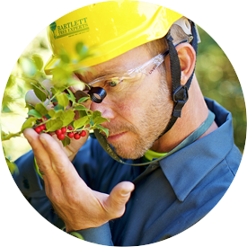 Plant Analysis and Diagnostics Tree Service