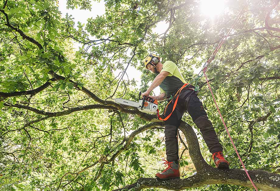 Tree Surgeons Continue with Outdoor Work