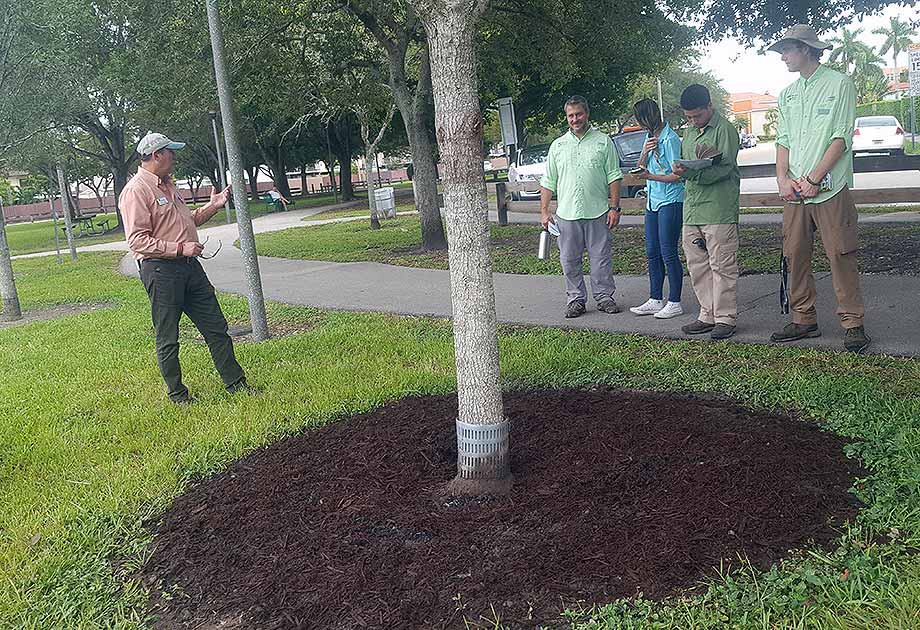 Bartlett Arborists Demonstrate Root Invigoration