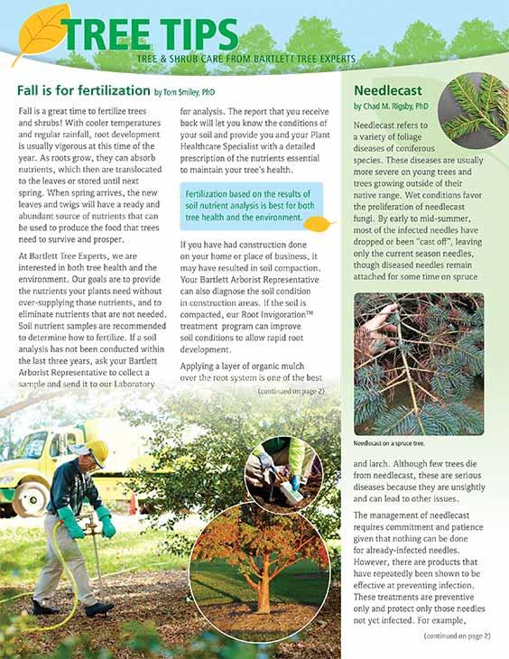 Bartlett Tree Tips - Autumn 2019