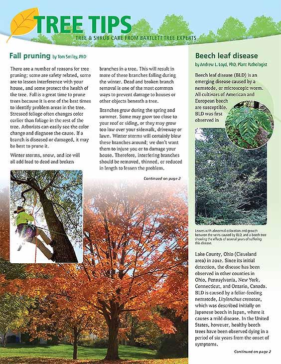 Bartlett Tree Tips - Autumn 2021