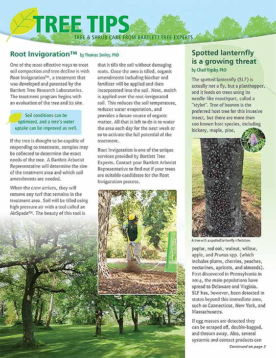 Bartlett Tree Tips - Spring 2020