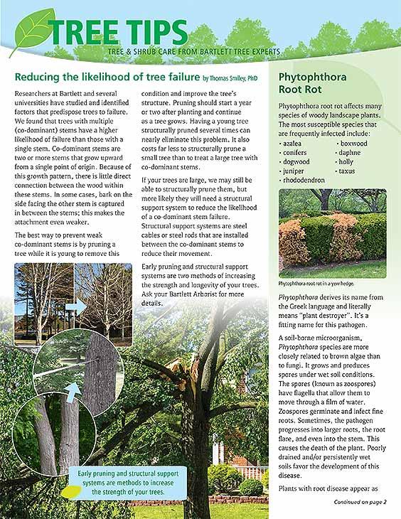 Bartlett Tree Tips - Summer 2021
