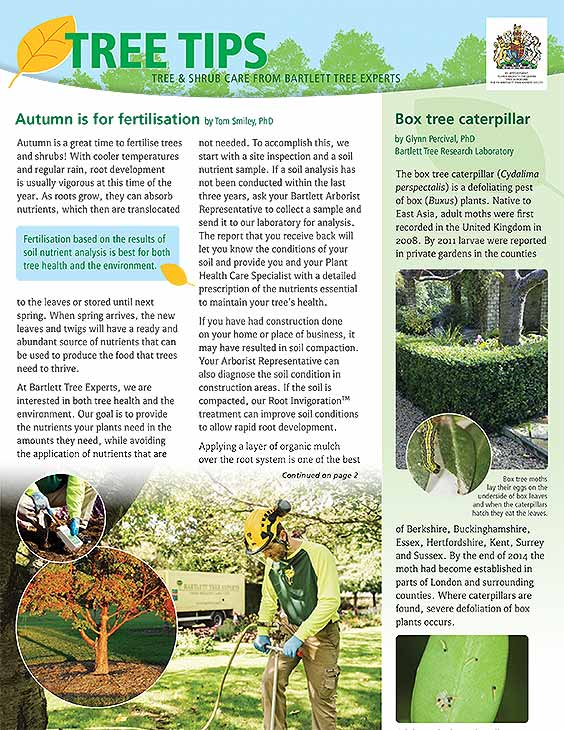 Bartlett Tree Tips - Autumn 2020