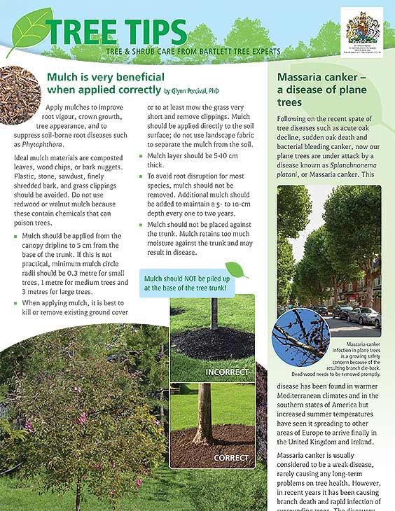 Bartlett Tree Tips - Summer 2020